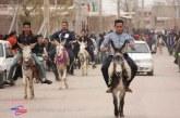 مسابقات الاغ سواری روستای برغمد عید۹۴