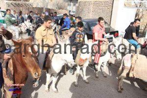 مسابقه الاغ سواری روستای برغمد سال 93